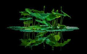 daily wallpaper aquatic jungle