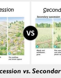 Primary And Secondary Succession Venn Diagram Primary And Secondary Succession Chart Www Homeschoolingforfree Org