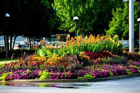 ideas full sun in beginners low maintenance tips u and plants easy ing flower garden