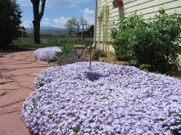 garden ground cover. Ground Cover Ideas Covers For Shade Garden