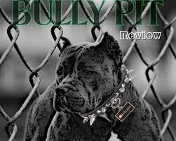 The Bully Pit Review An Introduction Into Chart Indicators