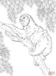 Small Picture Amazon Rainforest Animals coloring pages Free Printable Pictures