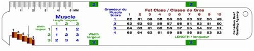 Canadian Beef Grading Chart Carcass Grading Beef Cattle Research Council