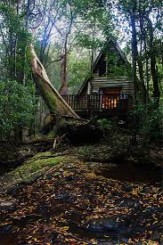 fairytale forest cote a frame house home in the woods