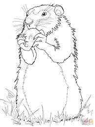 Small Picture Real Groundhog Cut Out Coloring Coloring Pages