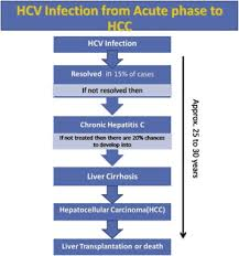 Concise Review On The Insight Of Hepatitis C Sciencedirect