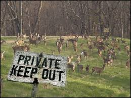 garden protection deer herd keep out