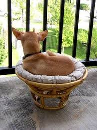 Favorite Things on Pinterest | Papasan Chair, Cardinals and Dog Nose