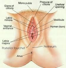 Girls vaginal opening photos