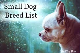 All Small Dog Breed List A Z 90 Tiny Dogs Pictures