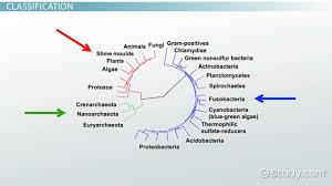 Bacteria Classification What Is Bacteria Definition Types