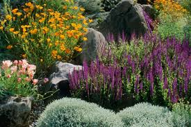 Small Picture GARDENWRIGHT DROUGHT TOLERANT COTTAGE GARDENS