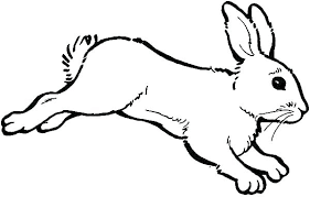Bunny Coloring Pages Printable Bunny Colouring Pages To Print