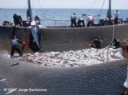 Image result for navios de pesca em bissau