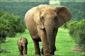 Image result for تحقیق در مورد انواع جانوران