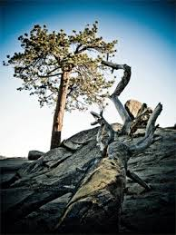 """the personal story behind the essay """"religion science and  trees photo by code poet"""