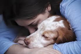 Wann Wie Merke Ich Dass Mein Hund Gehen Will Alles Dogde