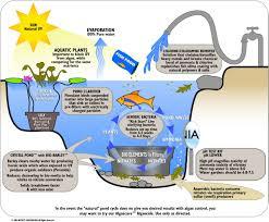 Water filter diagram for kids Man Made Water Filtration Diagram For Kids Google 検索 Pinterest Water Filtration Diagram For Kids Google 検索 Steam Pinterest