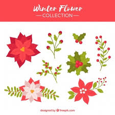 Poinsettia Designs Poinsettia Vectors Photos And Psd Files Free Download