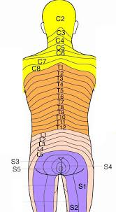 Dermatomal Pattern Delectable Sensory Dermatomes Of The Body Stepwards