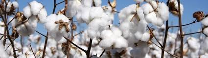 Mcx Cotton Live Chart World Market Live