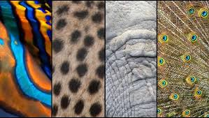 Animal Patterns Unique Can You Identify These Animal Patterns MNN Mother Nature Network