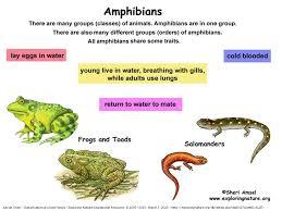 6 L 4b 1 Common Characteristics Of Vertebrates Invertebrates