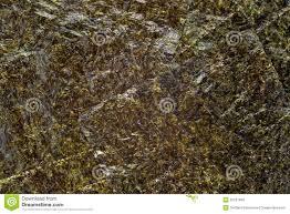 nori sheet nori seaweed sheet stock photo image of healthcare dried 32101946