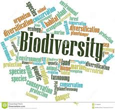 essay about biodiversity threat to biodiversity essay the life science grade