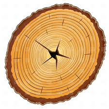 wood cross section clipart