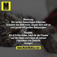 Werbung Ein Zartes Flauschiges Kätzchen Made My Day