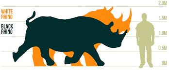 Rhino Fact Files Rhino Conservation Botswana