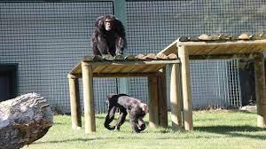 Gaziantep hayvanat bahçesi açık mı kapalı mı? - SonHaberler