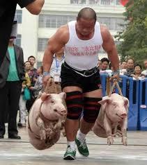 alternative of doing famer walks do them with pigs