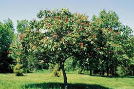 Unusual And Exotic Fruit And Nut Plant Seeds From Around The WorldFruit Trees In Kansas