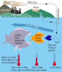 Mercury In Fish Wikipedia