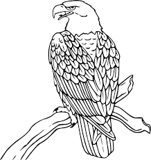 bald eagle template bald eagle cartoon drawing at getdrawings com free for personal