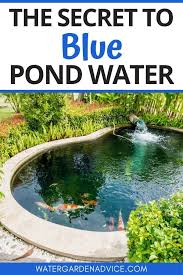 blue pond water guide fish pond