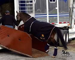 Horse Shipping Quotes Amazing Elite Horse Transport For National And Local Service 48 States And