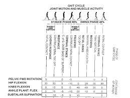 Gait Analysis Study Of Human Locomotion Walking And Running