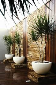 Beautiful Indoor Plant Ideas