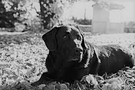 Trauer Um Hunde Lebewohl Fellnase