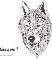 gray wolf face drawing. Beautiful Drawing Gray Wolf Drawing Illustration  Handpainted Pattern Positive Face Gray  To Wolf Face A