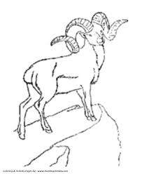 Small Picture Wild Animal Coloring Pages Goat with big horns Coloring Page and