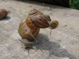 """Résultat de recherche d'images pour """"photos escargots"""""""