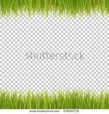 grass transparent background. Fresh Green Grass On Transparent Background. Spring Or Summer. Vector  Illustration. Background