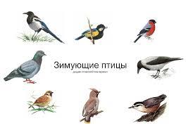 Методическая разработка занятия по теме Покормите птиц зимой  Методическая разработка занятия по теме Покормите птиц зимой 5 6 класс