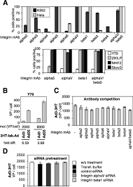 A New Group B Adenovirus Receptor Is Expressed at High Levels on Human Stem  and Tumor Cells | Journal of Virology