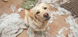 helping dogs with anxiety. Interesting With Separation Anxiety Inside Helping Dogs With