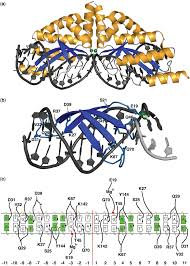 structure of the i vdi141i laglidadg homing endonuclease bound to its cognate dna target